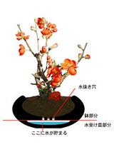 ishihachi02.jpg