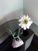 ishikaki91606.jpg