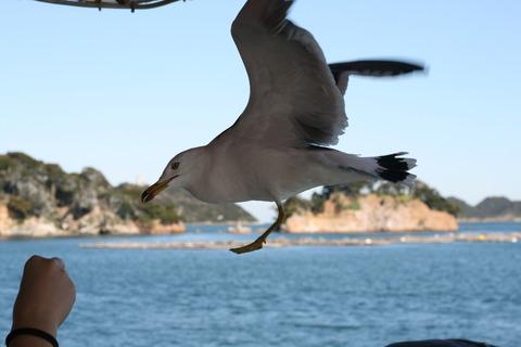 鳥羽湾巡りとイルカ島