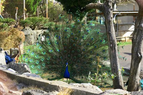 鳥羽・市民の森公園