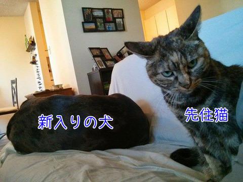 nakawarui