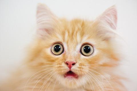 o-SURPRISED-CAT-facebook