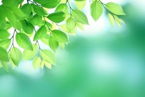 木の葉02