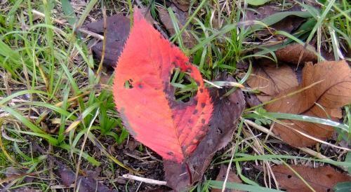 落ち葉はゴミか?
