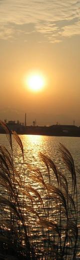 高須町 すすきと夕陽
