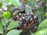 阪内川親水公園傍不法投棄ゴミ