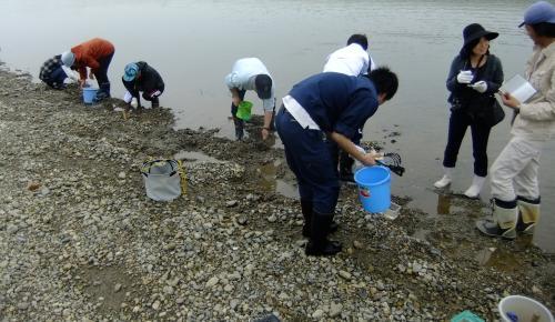 櫛田川イドミミズハゼ学術調査 20110503