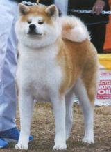 180330秋田犬保存会