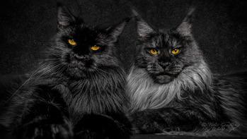 cat_me