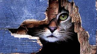 cat01289