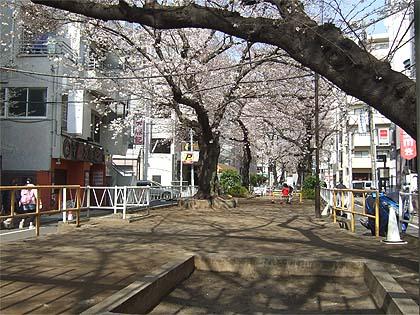 2013年目黒の桜