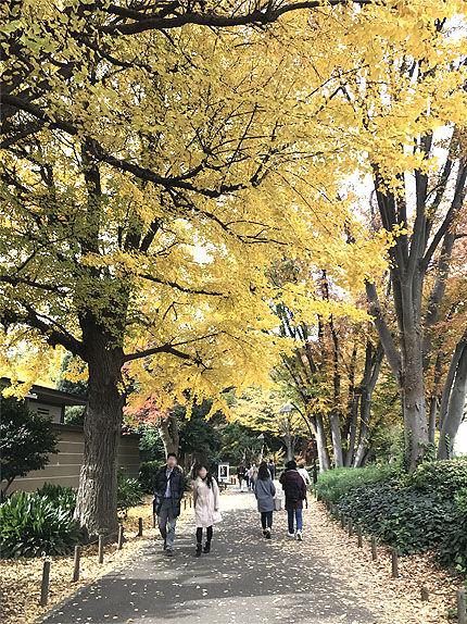 上野公園アースグラウディング1