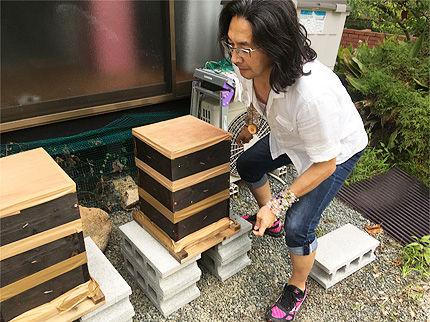 日本ミツバチ受け取り4