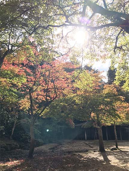 2018_1101紅葉谷公園1