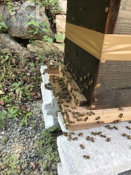 ミツバチを救う3