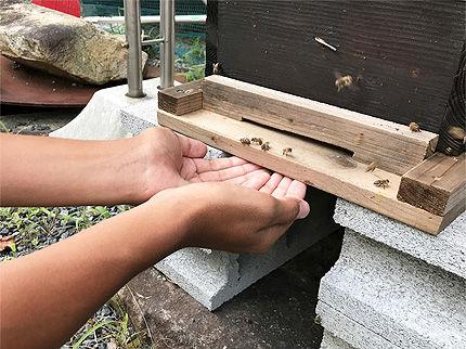 日本ミツバチ受け取り7