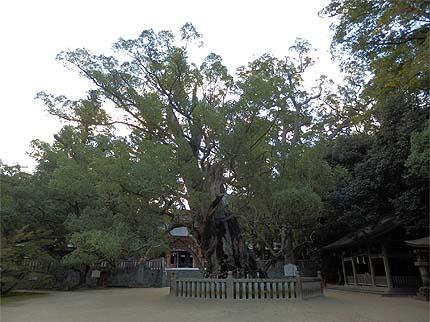 2018_1101大山祇神社7