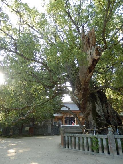 大山祇神社34
