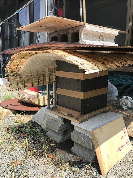 日本ミツバチ受け取り8