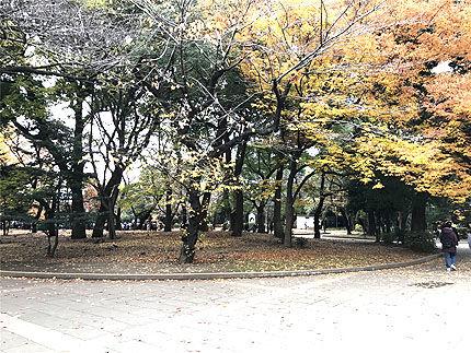 上野公園アースグラウディング2