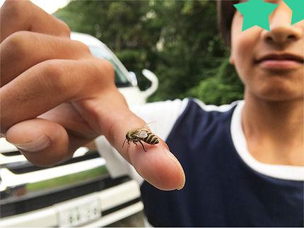 ミツバチを救う1