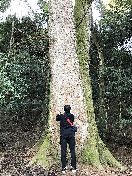 令和2年初詣_巨木パワーチャージ1