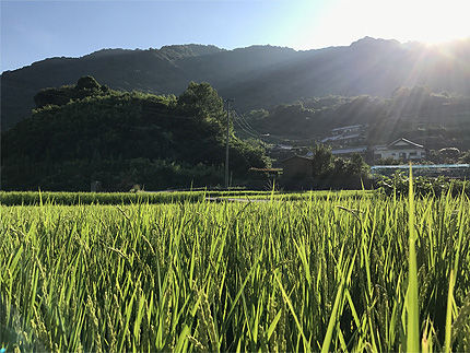 2017夏_行く季節2