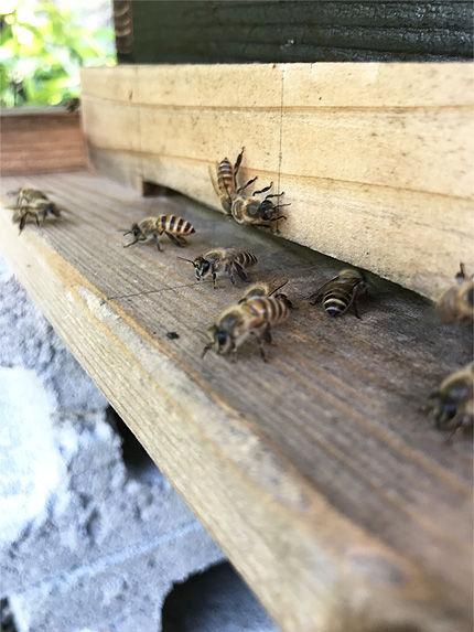 日本ミツバチ受け取り10