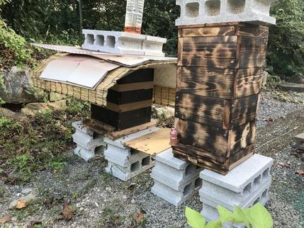 ミツバチを救う2
