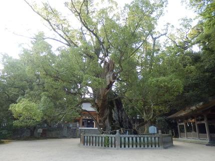 大山祇神社26