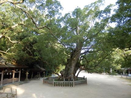 大山祇神社25