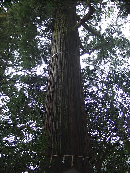 須佐神社6