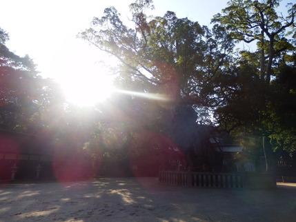 大山祇神社31