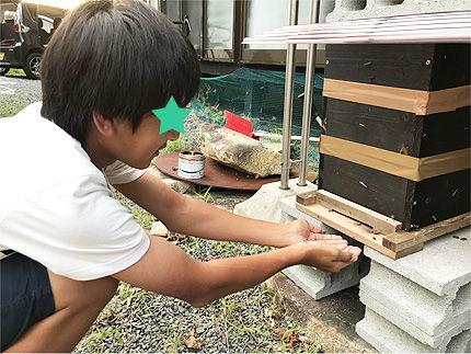 日本ミツバチ受け取り6