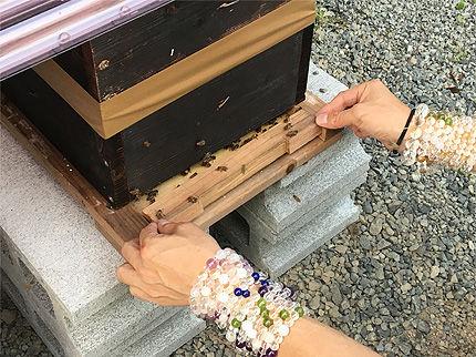 日本ミツバチ受け取り3