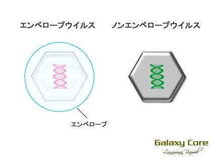 エンベロープウイルス構造