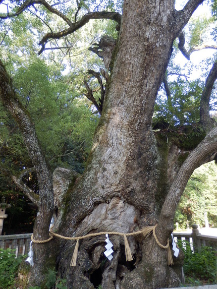 大山祇神社28
