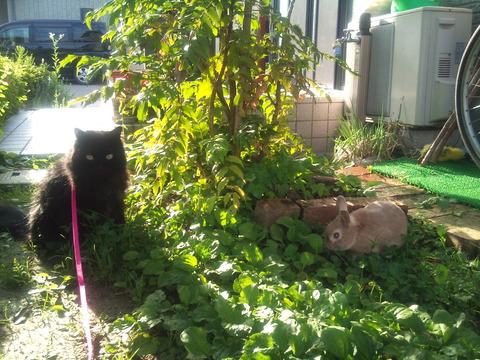 うさぎ ウサギ 猫 一緒 同居