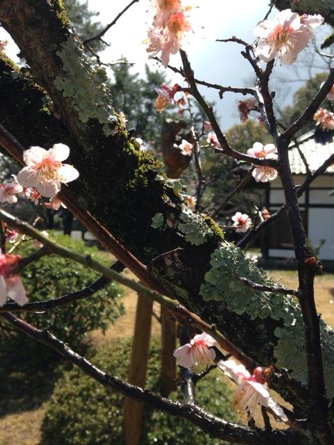 広隆寺の不空羂索観音