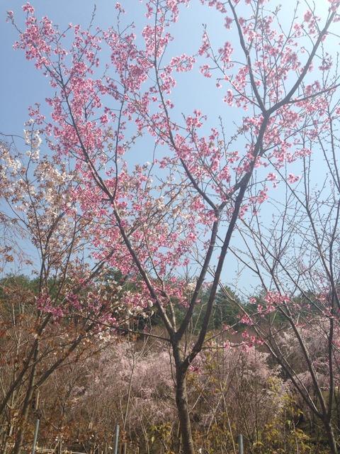 京都の春。個人的な体験。
