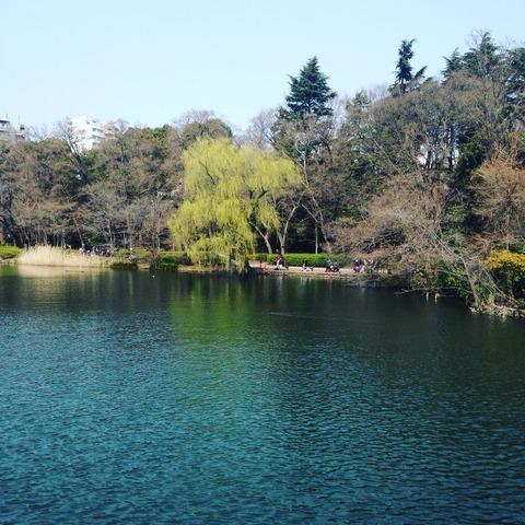東京の春は四年振り
