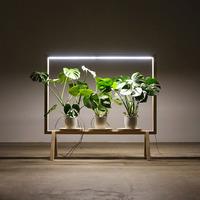 Limbus+GreenFrame