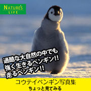 180-na-penguin