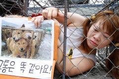 猛暑で犬肉需要が急増!? 夏バテ防止に珍重 北朝鮮