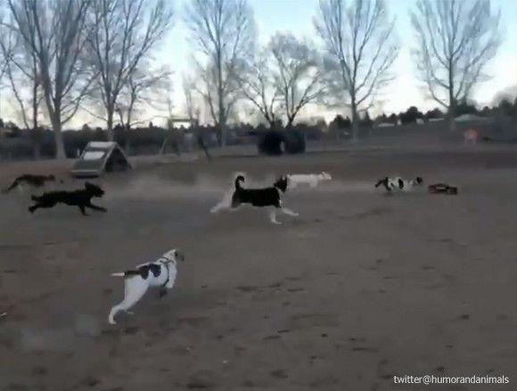 「犬がいくら追いかけてもラジコンを捕まえられない動画がこちら」