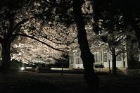 "1040神戸市立王子動物園""夜桜通り抜け"""