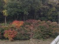 2051宝塚市・三田市の紅葉