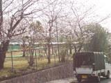 327神戸市東灘区御影山手・桜