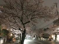 2099夜桜