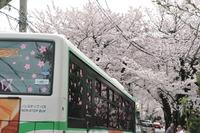 2110桜のトンネル